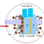 Nguyên-lý-lọc-của-màng-MBR